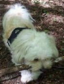 Mettes hund Lucca (juni 2015)