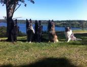 Aiza (ikke på billedet, er kun ½ år), Sara, Divi, Athena, Uno & Speedy