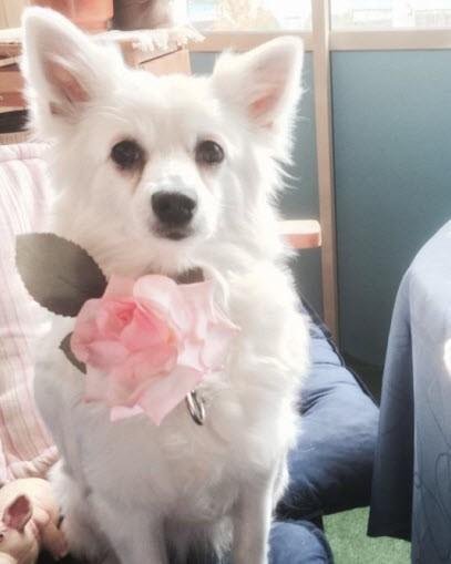 Anita Strandh siger om sin hund Kitty (oktober 2015)