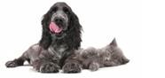 Hund/Katt